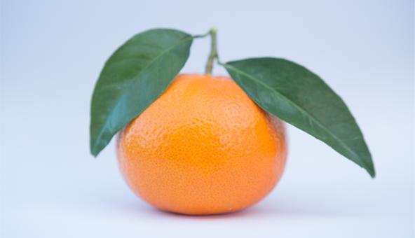 Recta final para regularizar plantaciones de la mandarina 'Spring Sunshine' a 12 euros por árbol